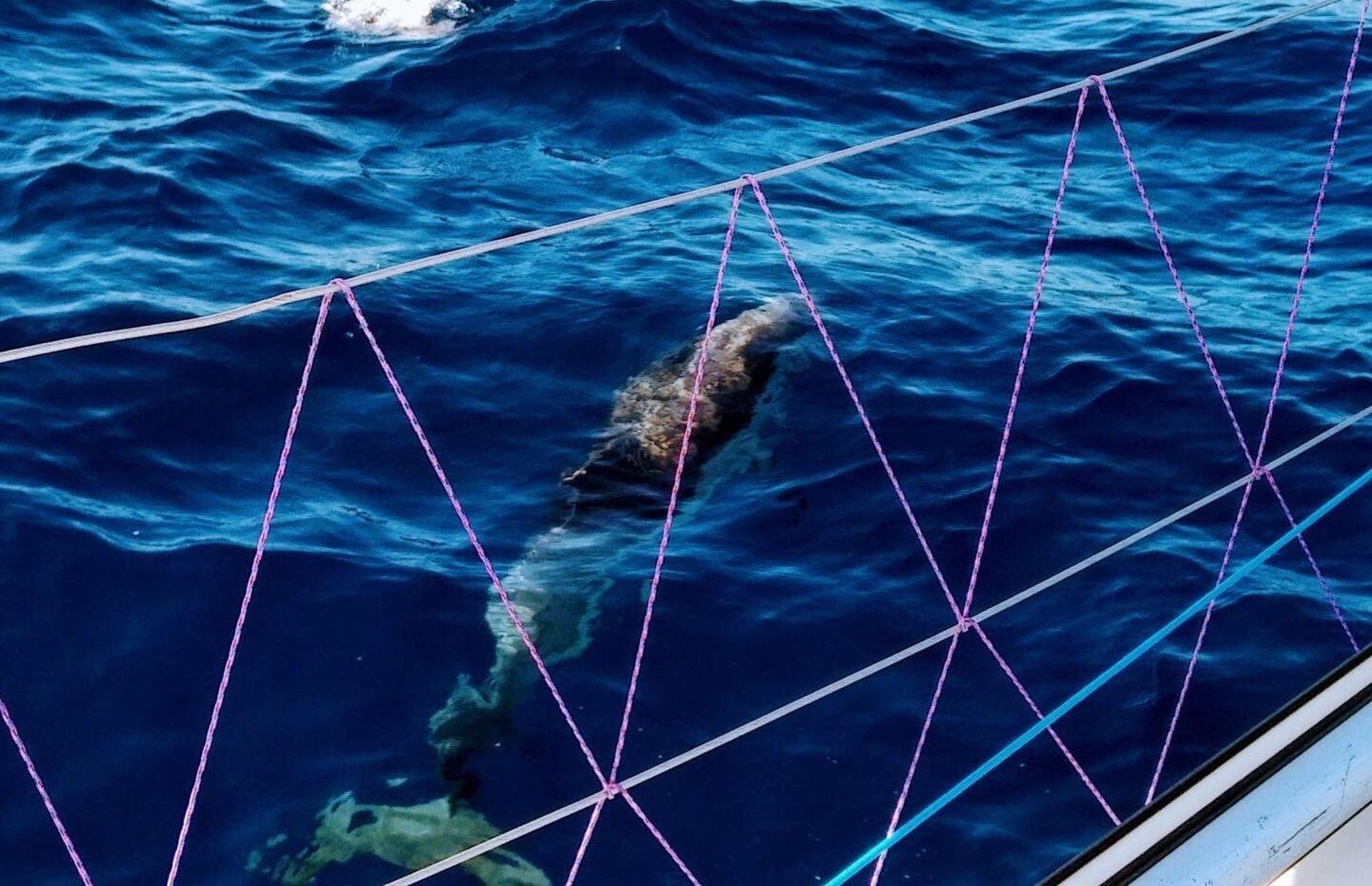 https://media.insailing.com/boat/seawolf/image_1581589609388.jpg