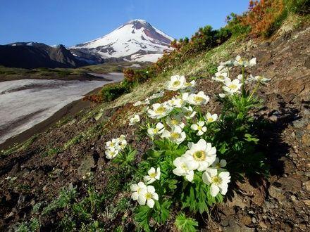 https://media.insailing.com/event/parusnaya-ekspediciya-na-kamchatku/image_1589271274778.jpg