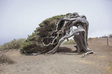 https://media.insailing.com/event/vesna-na-kanarah-4-ostrova-tenerife---la-gomera---la-palma---ierro-za-10-dney-310-nm/image_1580728482788.jpg